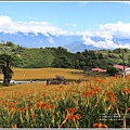 赤柯山小瑞士杉林木-2020-08-20.jpg
