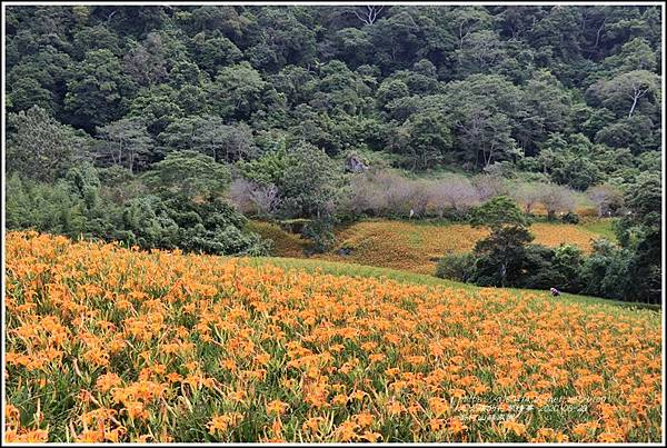 赤柯山林家園-2020-08-04.jpg
