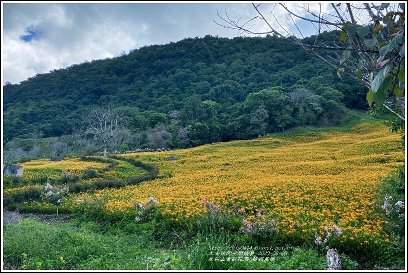 赤柯山黎園農園-2020-08-06.jpg