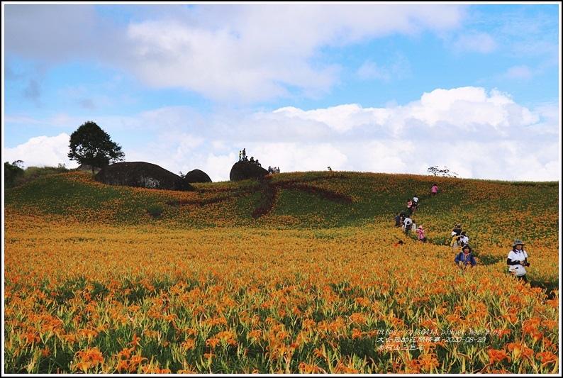 赤柯山金針花海(三巨石)-2020-08-06.jpg