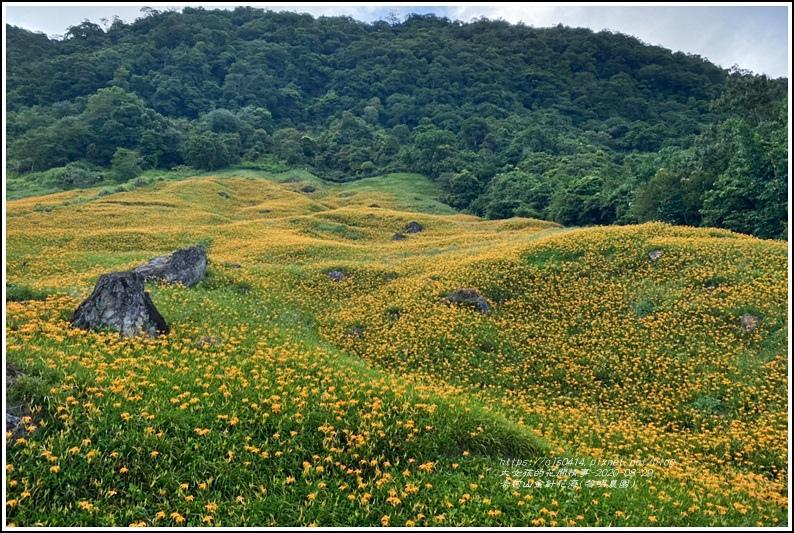 赤柯山黎園農園-2020-08-02.jpg