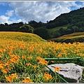 赤柯山小瑞士農場-2020-08-24.jpg
