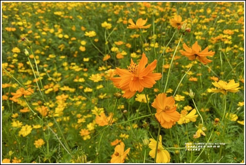 吉安大波斯菊-2020-09-06.jpg