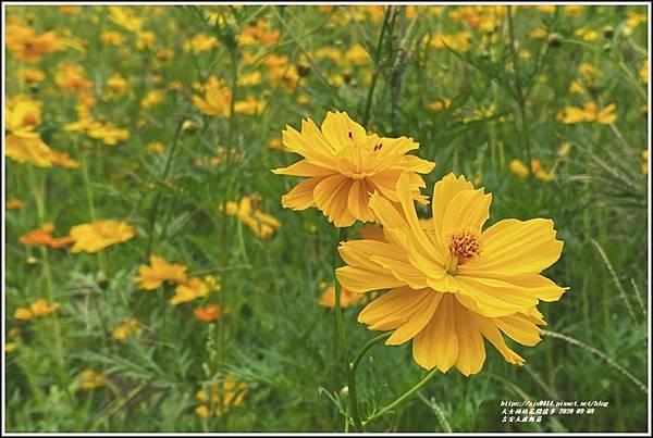 吉安大波斯菊-2020-09-07.jpg