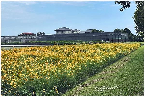 吉安大波斯菊-2020-09-08.jpg