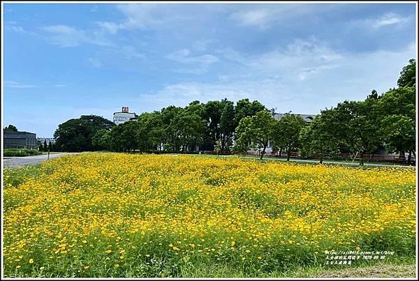 吉安大波斯菊-2020-09-09.jpg