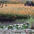 玉里東豐竹林湖-2020-09-04.jpg