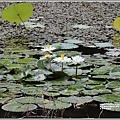 玉里東豐竹林湖-2020-09-07.jpg