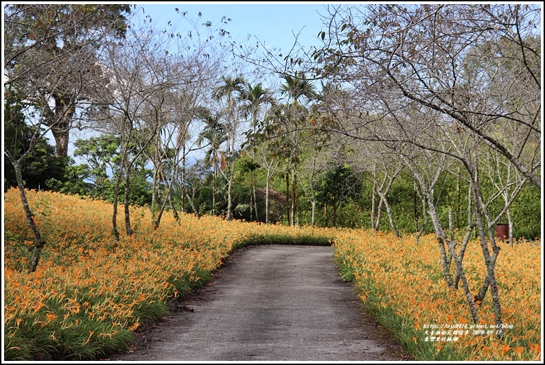玉里東豐竹林湖-2020-09-11.jpg