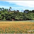 玉里東豐竹林湖-2020-09-10.jpg