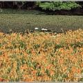 玉里東豐竹林湖-2020-09-13.jpg