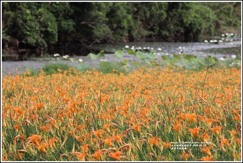 玉里東豐竹林湖-2020-09-19.jpg