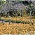 玉里東豐竹林湖-2020-09-27.jpg