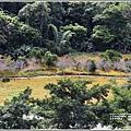 玉里東豐竹林湖-2020-09-43.jpg