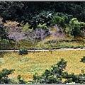 玉里東豐竹林湖-2020-09-48.jpg