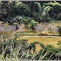 玉里東豐竹林湖-2020-09-61.jpg