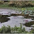 玉里東豐竹林湖-2020-09-64.jpg