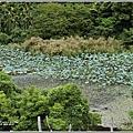 玉里東豐竹林湖-2020-09-65.jpg