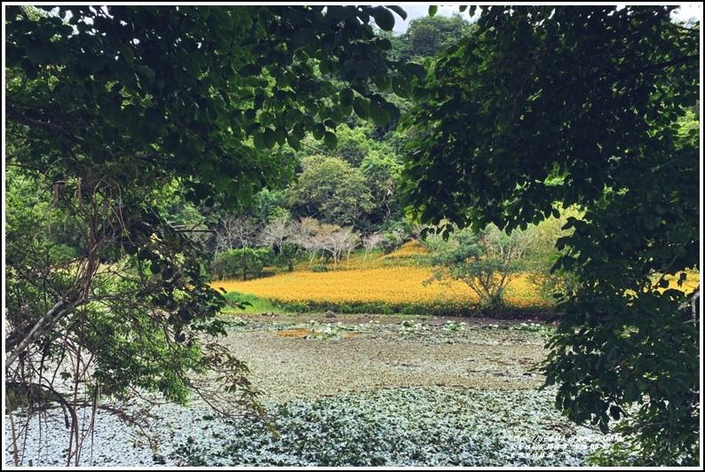 玉里東豐竹林湖-2020-09-81.jpg