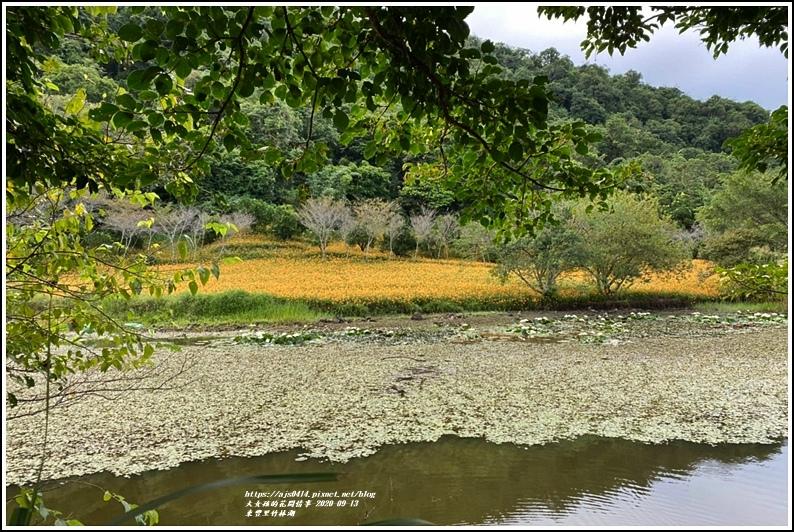 玉里東豐竹林湖-2020-09-86.jpg
