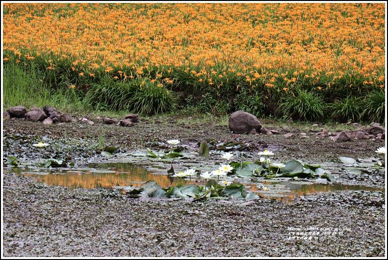 玉里東豐竹林湖-2020-09-88.jpg