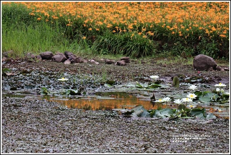 玉里東豐竹林湖-2020-09-90.jpg