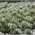 吉安九月雪-2020-09-29.jpg