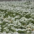 吉安九月雪-2020-09-14.jpg