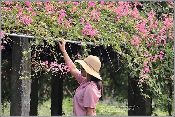 瑞美社區小公園珊瑚藤-2020-10-23.jpg