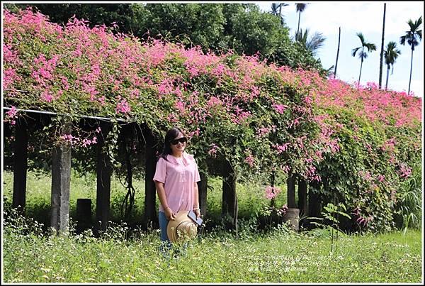 瑞美社區小公園珊瑚藤-2020-10-21.jpg