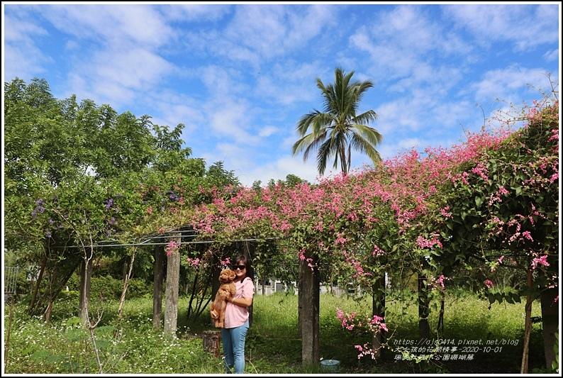 瑞美社區小公園珊瑚藤-2020-10-15.jpg