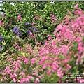 瑞美社區小公園珊瑚藤-2020-10-12.jpg