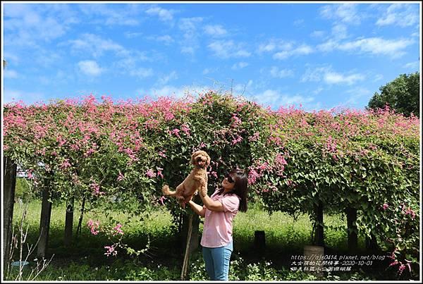 瑞美社區小公園珊瑚藤-2020-10-16.jpg