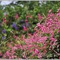 瑞美社區小公園珊瑚藤-2020-10-07.jpg