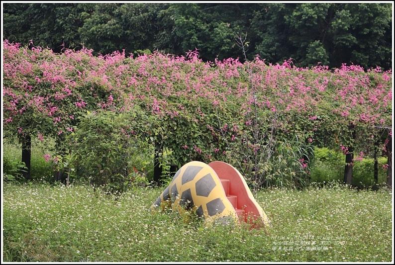 瑞美社區小公園珊瑚藤-2020-10-01.jpg