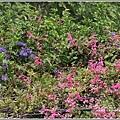 瑞美社區小公園珊瑚藤-2020-10-06.jpg