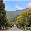 瑞穗溫泉路台灣欒樹-2020-09-08.jpg
