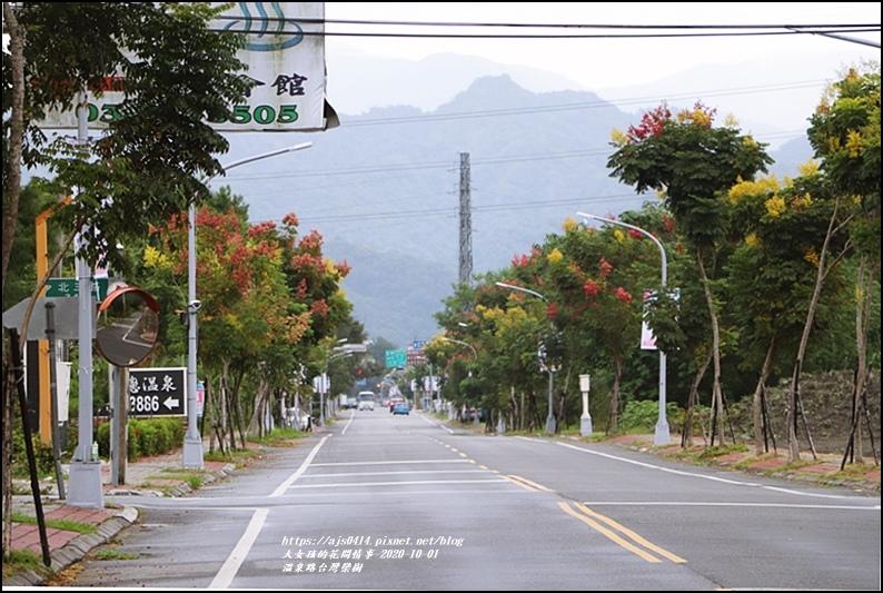瑞穗溫泉路台灣欒樹-2020-10-19.jpg