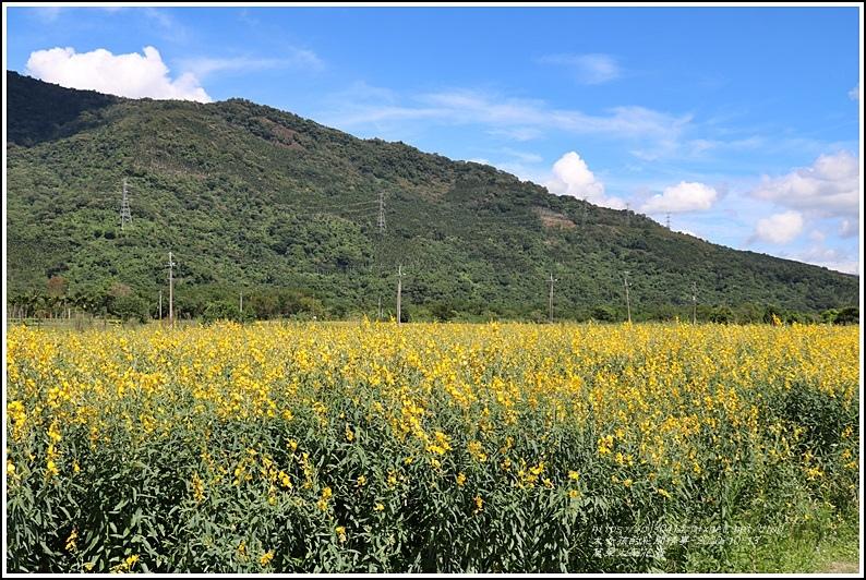 萬榮太陽花海-2020-10-05.jpg