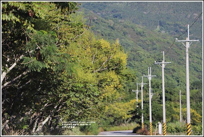 富興台灣欒樹-2020-09-05.jpg