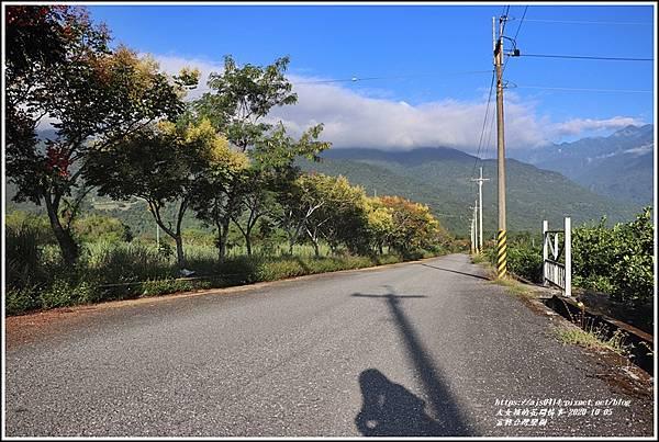 富興台灣欒樹-2020-10-14.jpg
