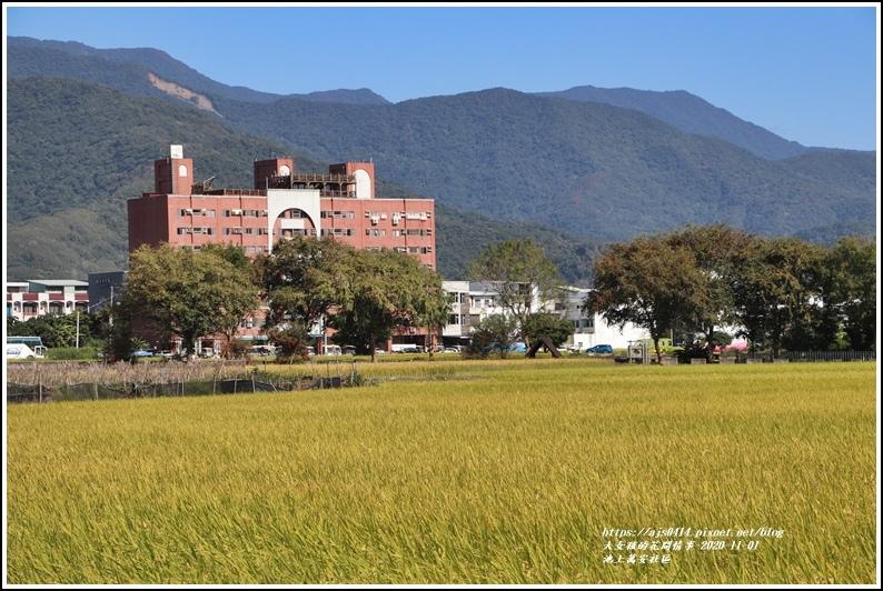 池上萬安社區-2020-11-11.jpg