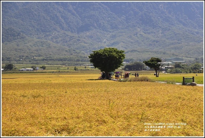 池上黃金稻田-2020-11-02.jpg
