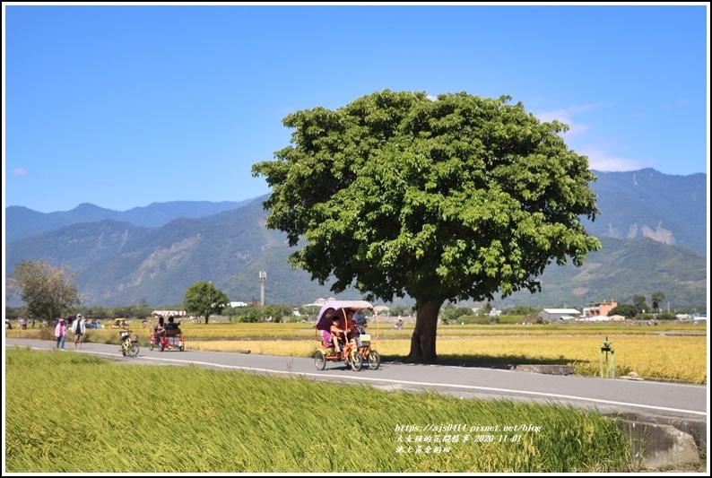 池上黃金稻田-2020-11-06.jpg
