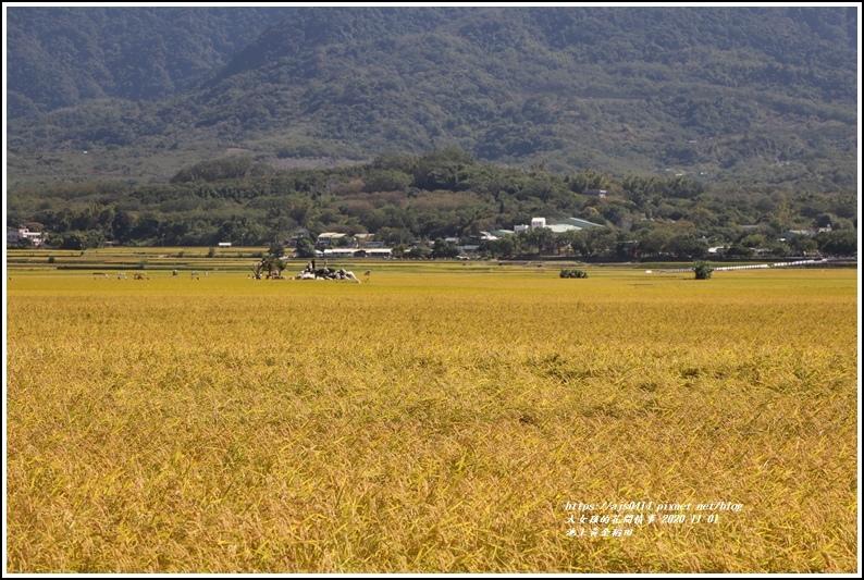 池上黃金稻田-2020-11-04.jpg
