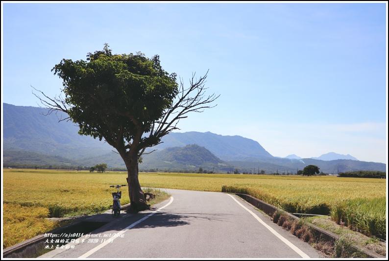 池上黃金稻田-2020-11-09.jpg