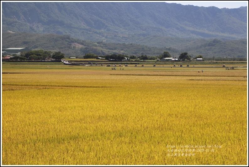池上黃金稻田-2020-10-56.jpg