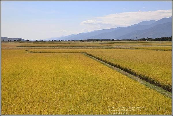 池上黃金稻田-2020-10-55.jpg