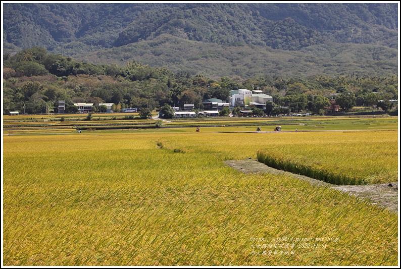 池上黃金稻田-2020-10-54.jpg