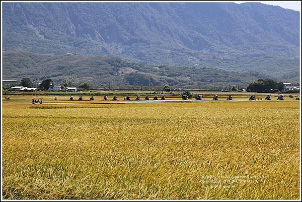 池上黃金稻田-2020-10-53.jpg